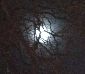 Moonlight through the trees on Saturday night
